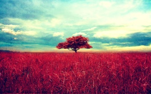 image from http://ilovehdwallpapers.com/view-scenery-red-grass-tree-sky-1920x1200.html